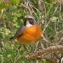 birds-19