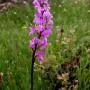 orchids-15