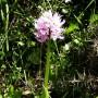 orchids-05