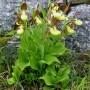 orchids-17